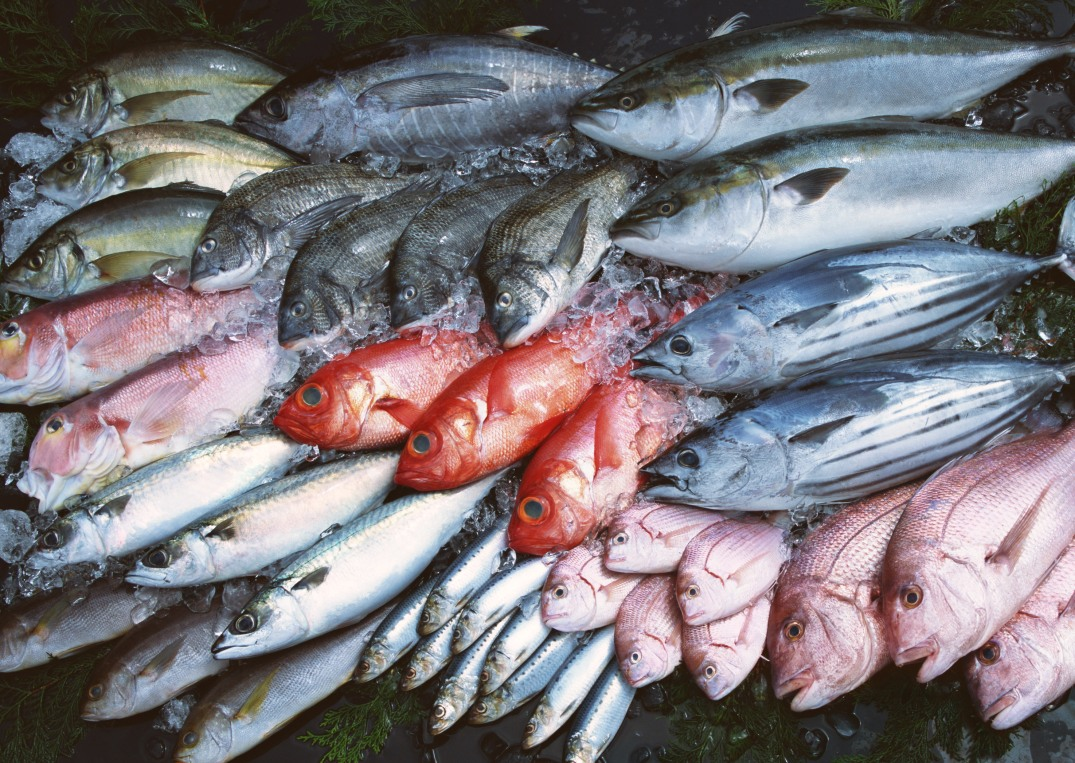 how to tell if fresh fish is bad